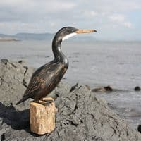 Cormorant Carving | Hand Carved Bird | Bird Carving